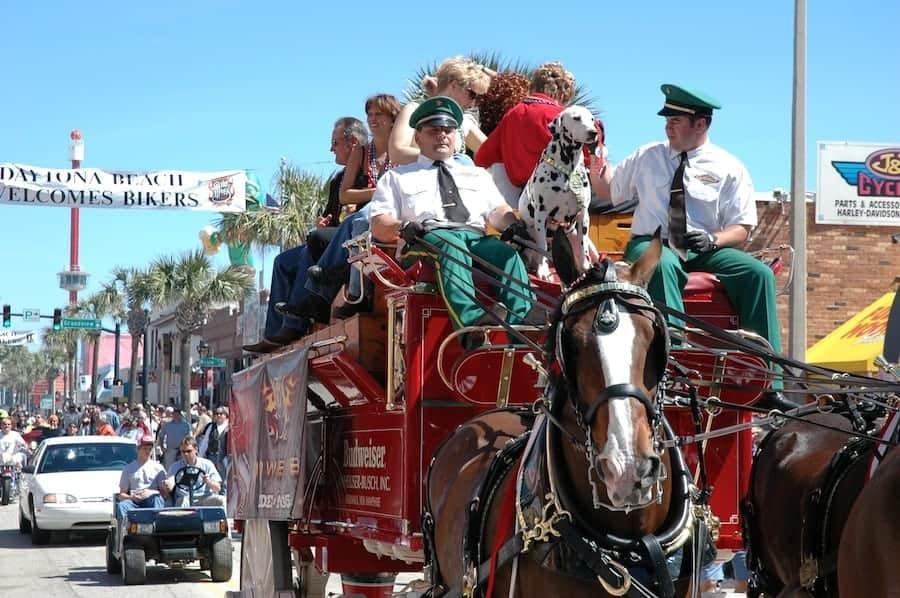 Budweiser horse and carriage on Main Street during Daytona Bike Week